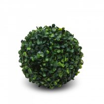 Garden of Eden Bukszus - közepes - 15 cm