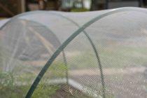 Rovar elleni védőháló zöldségeskertekhez, 2x10m átlátszó1x1mm 38g/m2