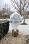 Téli növényvédelem